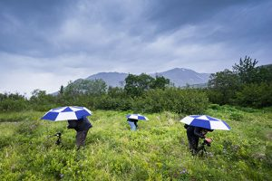 photographers shooting wildflowers in alpine meadow with umbrellas in the rain - anchorage photo tour