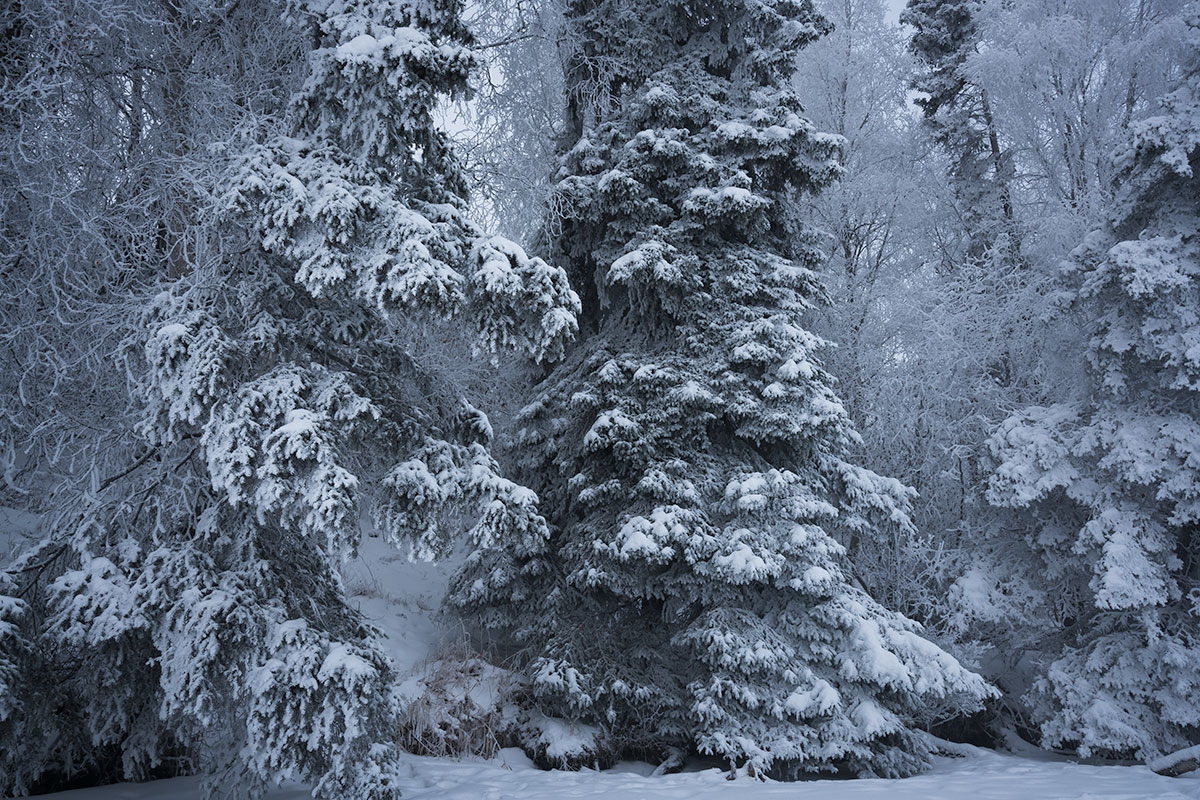 photographing winter landscapes