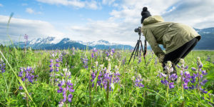 girl photographing field of lupine with a tripod - learn photography on tour