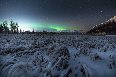 low angle of frosty field of grass with aurora - northern lights photo tour