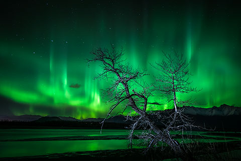 dead tree in front of aurora - northern lights photo tour