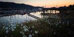 small boat harbor at sunset with daisies - seldovia, alaska