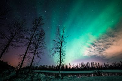 aurora band with silhouetted trees - northern lights photo tour