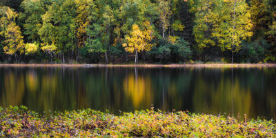 golden birch across reflective pond in autumn - improve your photos