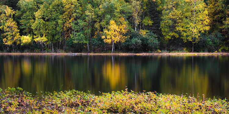 Golden birch reflecting on pond in autumn - improve your photos