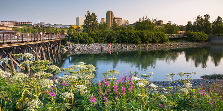 ship creek in summer with wildflowers in foreground and pedestrian bridge - anchorage walking tour