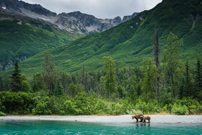 sow and cub brown bear standing on shore of crescent lake - alaska brown bear