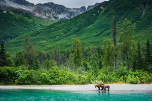 sow and cub on shore of turquoise lake - alaska photography tours