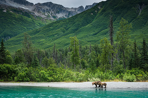 sow and cub brown bear walking on shore of crescent lake - photograph alaska wildlife