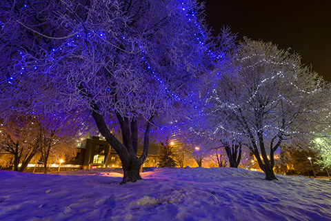 lit frosty trees - nighttime photo tour