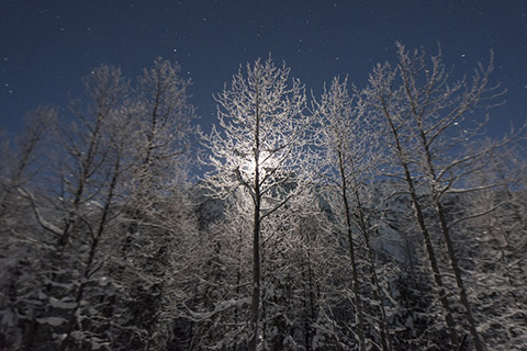 Frosty trees and moon